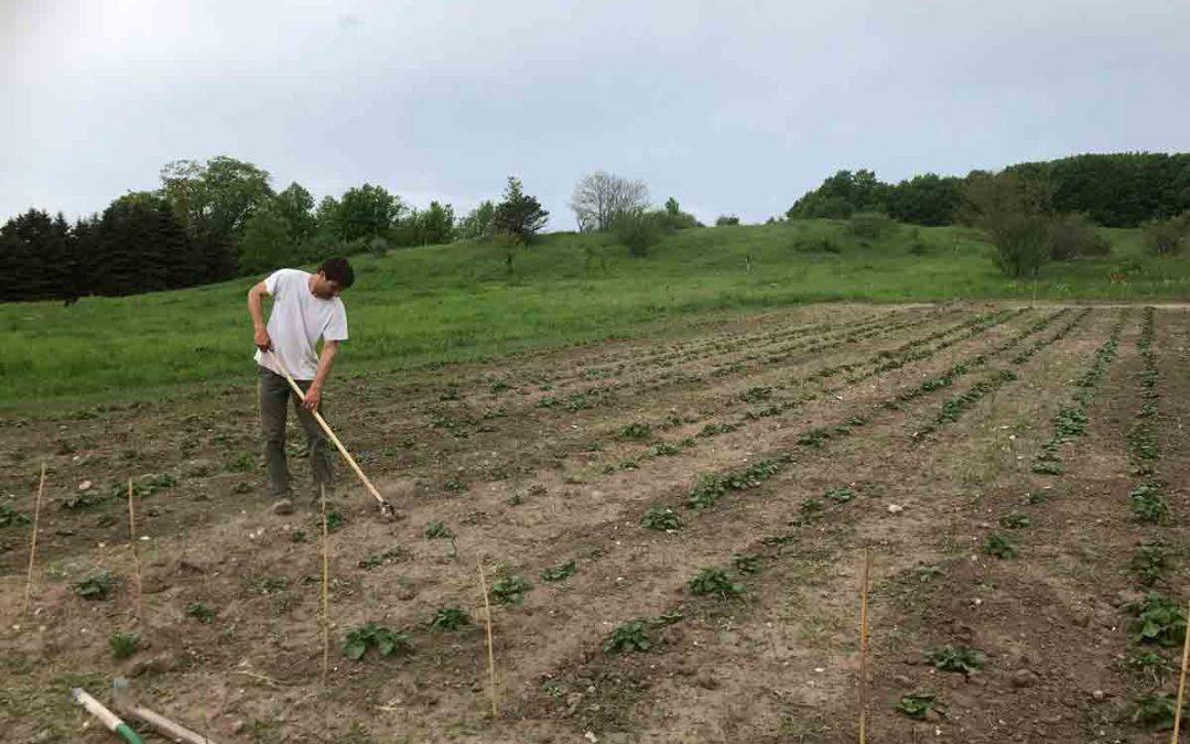 Spring Planting In Northern Michigan