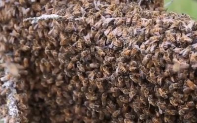 The First Swarm